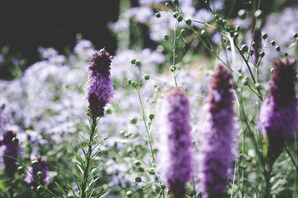 Blommor i Drömparken i Enköping